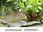water dragon on a log   Shutterstock . vector #25499047