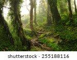 nepal jungle | Shutterstock . vector #255188116