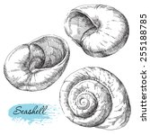 beauty set of various sea... | Shutterstock .eps vector #255188785