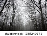 winter landscape with trees in... | Shutterstock . vector #255240976