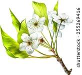 vector illustration of cherry... | Shutterstock .eps vector #255269416