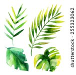 Set Of Four Tropical Leaves....