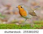 Robin On Tha Lichen