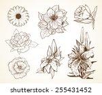 Set Of Flowers Poppy Daisy...