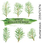 A Set Of 6 Small Pine Branches...