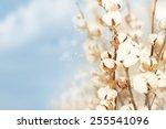 cotton background. | Shutterstock . vector #255541096