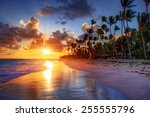 palm tree sandy beach sunrise  | Shutterstock . vector #255555796
