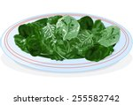 illustration of plate of spinach | Shutterstock .eps vector #255582742