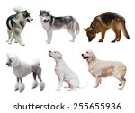 Set Of Dogs. Isolated On White...