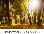 sunrise in autumn forest  | Shutterstock . vector #255729418