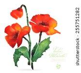 vector watercolor flower on... | Shutterstock .eps vector #255751282