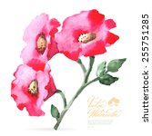 vector watercolor flower on... | Shutterstock .eps vector #255751285