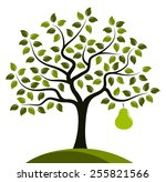 vector pear tree with one big... | Shutterstock .eps vector #255821566