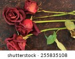 dried roses on brown rustic... | Shutterstock . vector #255835108