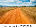road of savanna field in summer ... | Shutterstock . vector #255855256