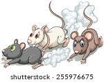 Three Rats Racing On A White...
