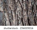 tree texture background | Shutterstock . vector #256035016