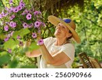 Happy Senior Woman Tends The...