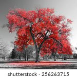 big red tree in a black and... | Shutterstock . vector #256263715
