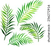 palm leafs. watercolor vector... | Shutterstock .eps vector #256272916