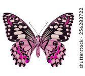 beautiful pink butterfly  lime... | Shutterstock . vector #256283722