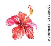 beautiful single vector... | Shutterstock .eps vector #256285012