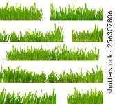 green grass isolated on white... | Shutterstock . vector #256307806