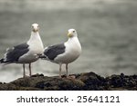 Two Seagulls At The Coast