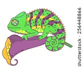 chameleon and the flower on a... | Shutterstock .eps vector #256448866