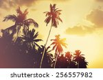 tropical beach background with... | Shutterstock . vector #256557982