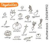 set of vegetables  | Shutterstock .eps vector #256569952