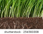 bright green grass with roots...   Shutterstock . vector #256583308