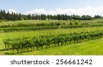 countryside near lucca  tuscany ... | Shutterstock . vector #256661242