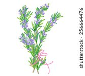 Rosemary Bundle Vector...