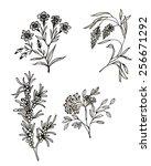 hand drawn herbal flowers set... | Shutterstock . vector #256671292