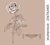 vintage rose. hand drawn vector ...   Shutterstock .eps vector #256762405