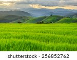Green Terraced Rice Field In P...