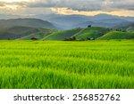Green Terraced Rice Field In P...