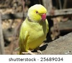 ring neck yellow parrot | Shutterstock . vector #25689034