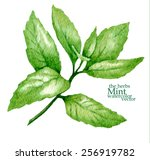 hand made vector sketch of mint ... | Shutterstock .eps vector #256919782