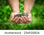 Small photo of Senior man holding young plant in hands against spring green background. Ecology concept