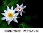 lotus | Shutterstock . vector #256966942