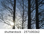shine sunlight through trees in ... | Shutterstock . vector #257100262