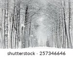 Snow Covered Branches Of Tree...