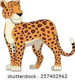 Leopard Walking  Wild Big Cat...