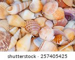 Seashell Background  Lots Of...