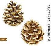 Watercolor  Pine Cone  Nature