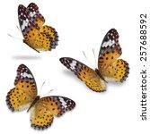 three yellow butterfly ...   Shutterstock . vector #257688592
