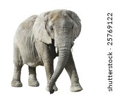 african elephant with clipping path - stock photo