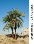 Palm Tree In Desert By Karnak